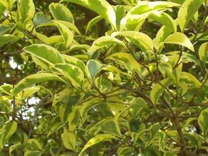 Pagina nueva 1 for Arboles de hojas perennes para veredas