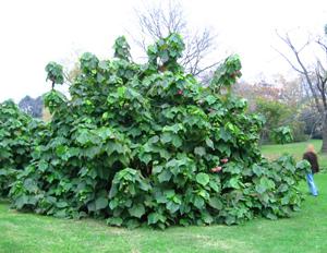 Jardin botanico invierno for Jardin botanico cursos