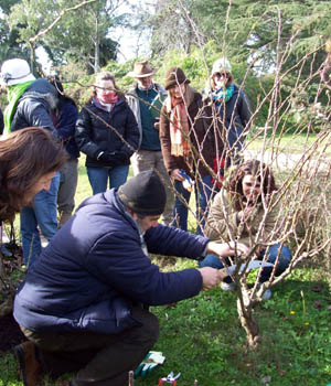 Rosas 2011 for Viveros en uruguay