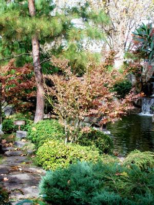 Jardin japones otono for Jardin japones cursos