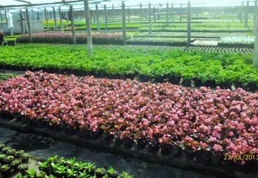 Plantas para jardineras al sol good tambin hay otras for Como iniciar un vivero